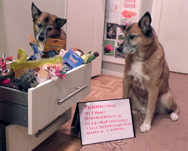 Dog shaming -Joona