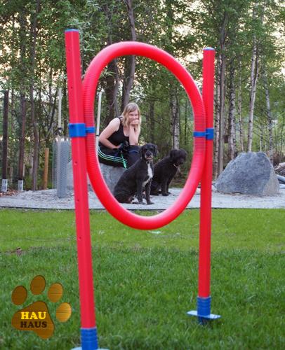 koirien kulmaus ja agilityrengas