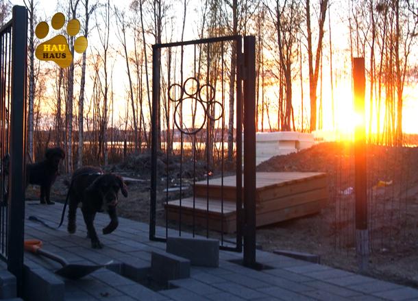 kivetys, koirat ja portti ilta-auringossa