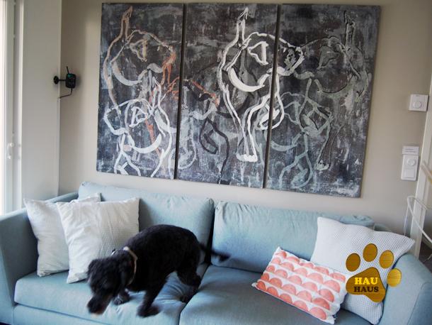 koira sohvalta