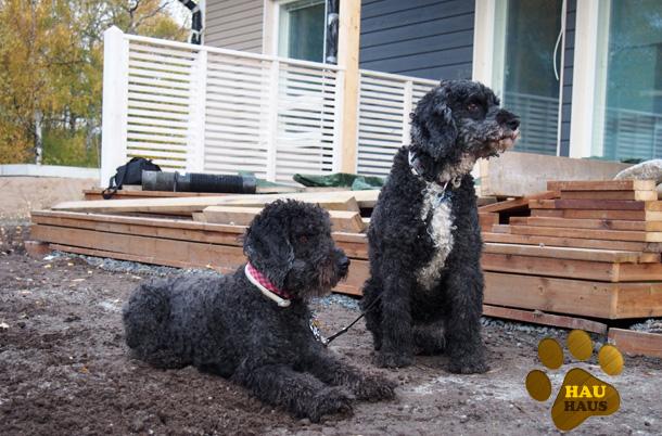 Koirat pihatöissä