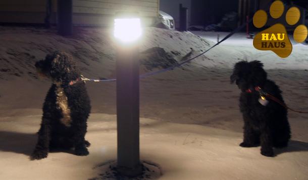 koirat ja valot