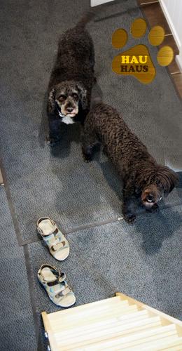 koirat haikailevat käyttöullakolle